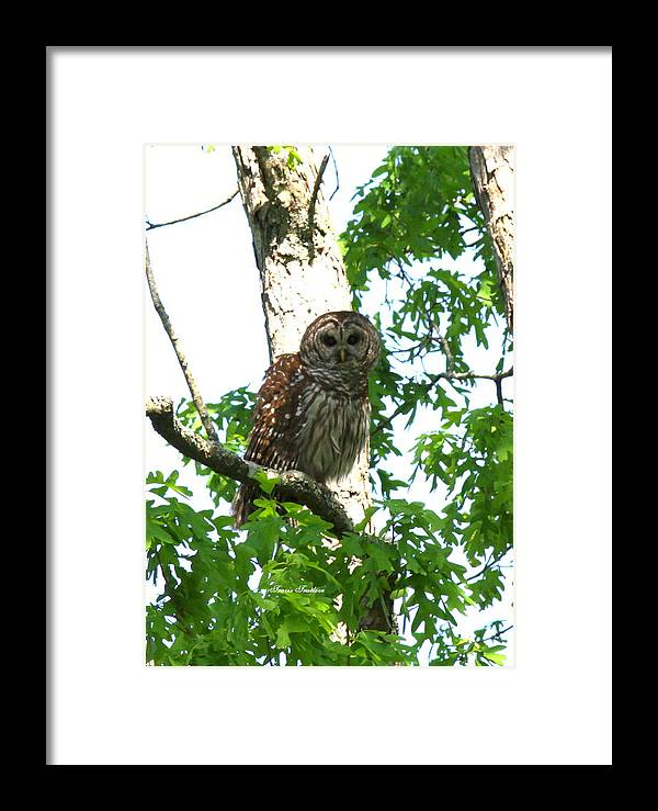 Barred Owl Framed Print featuring the photograph 0298-001 - Barred Owl by Travis Truelove