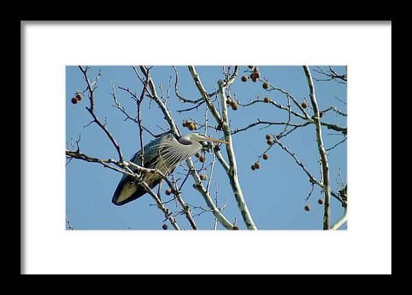 Bird Framed Print featuring the photograph 040510-78 by Mike Davis