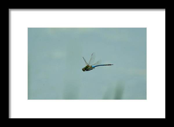 Dragonfly Framed Print featuring the photograph 051509-34 by Mike Davis