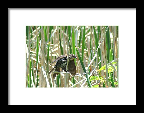 Bird Framed Print featuring the photograph 052909-85 by Mike Davis