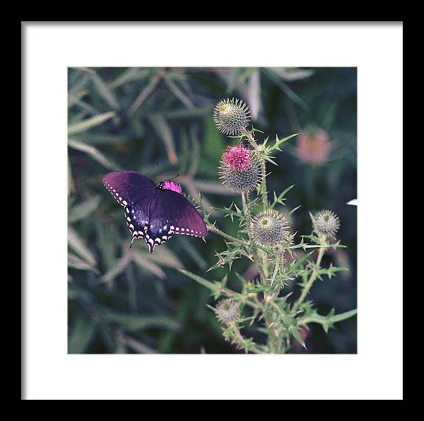Butterfly Framed Print featuring the photograph 060207-13 by Mike Davis