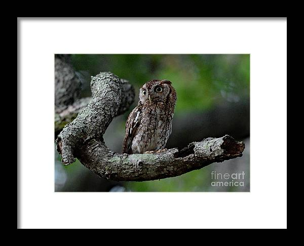6/10/18 Framed Print featuring the photograph 0643 by Don Solari
