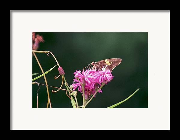 Butterfly Framed Print featuring the photograph 072106-19 by Mike Davis