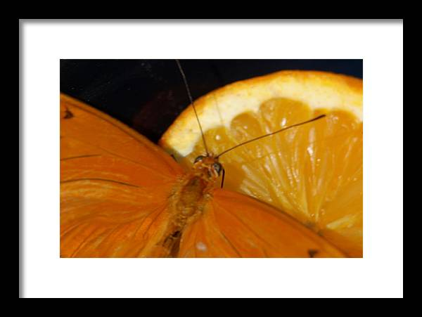Butterfly Framed Print featuring the photograph A Butterfly At Lunch I by Susan Heller