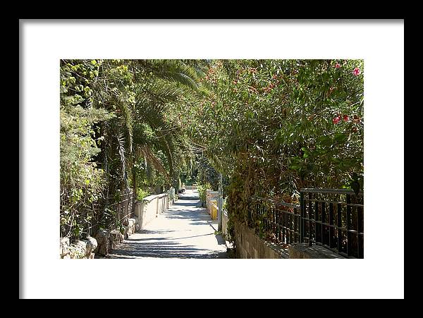 Israel Framed Print featuring the photograph A Walk In Rehavia by Susan Heller