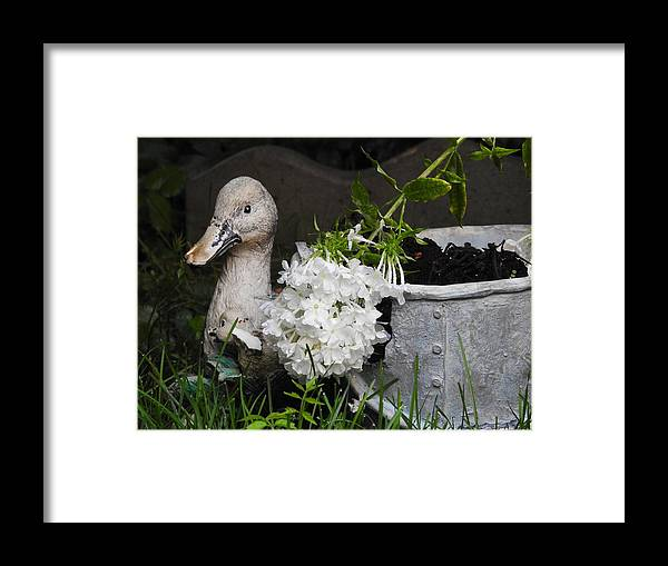 Lawn Framed Print featuring the photograph After The Rain by Betty-Anne McDonald