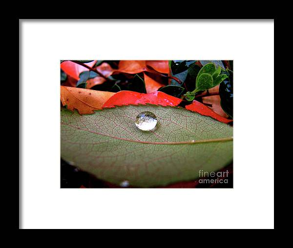 Cml Brown Framed Print featuring the photograph All Aboard by CML Brown