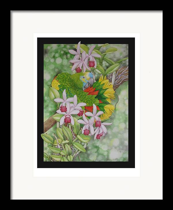 Orchids Framed Print featuring the painting Amazon 3 by Darren James Sturrock