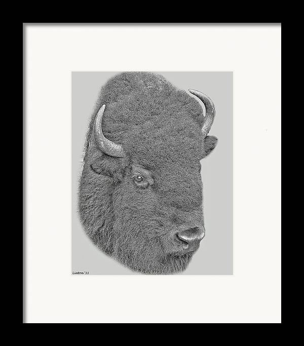 American Bison Framed Print featuring the digital art American Bison by Larry Linton