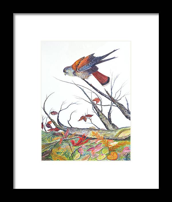 Bird Framed Print featuring the painting American Kestrel by Ben Kiger