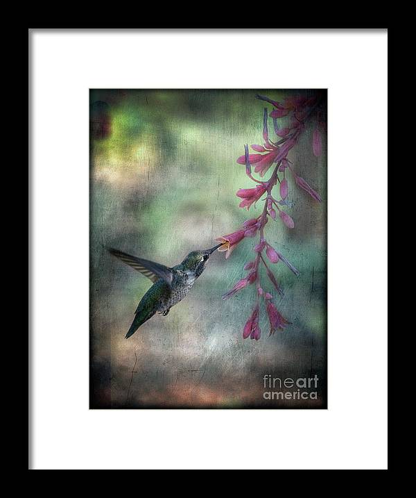 Anna's Hummingbird Framed Print featuring the photograph Anna's Hummingbird by Saija Lehtonen