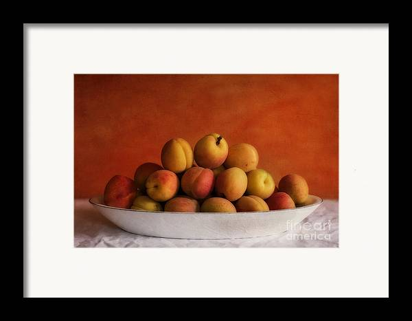 Apricot Framed Print featuring the photograph Apricot Delight by Priska Wettstein