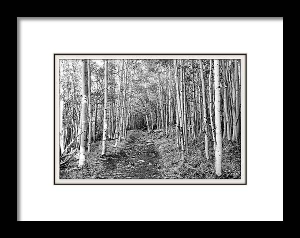 Aspen Framed Print featuring the photograph Aspen Forest by Farol Tomson
