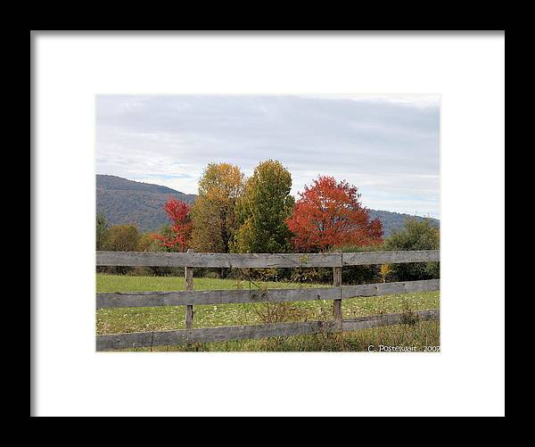 Trees Framed Print featuring the photograph Autumn on Point Mountain by Carolyn Postelwait