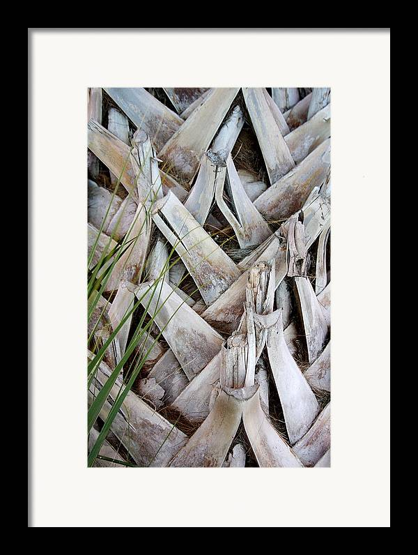 Bark Framed Print featuring the photograph Bark by Kenna Westerman