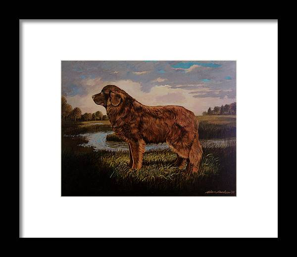 Newfoundland Water Dog Life Saving . Framed Print featuring the painting Beautiful Bear-like Friend. by Alan Carlson