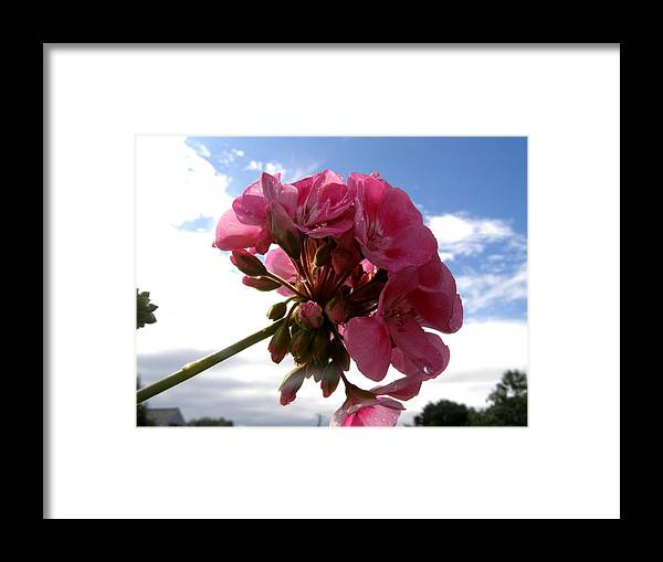 Flowers Framed Print featuring the photograph Beauty In The Sky by Jeanette Oberholtzer