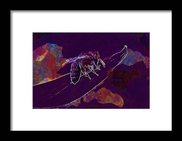 Bee Framed Print featuring the digital art Bee Honey Bee Apis Insect Flower by PixBreak Art