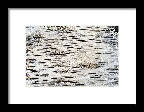 Birch Bark Framed Print by Bill Brennan - Printscapes