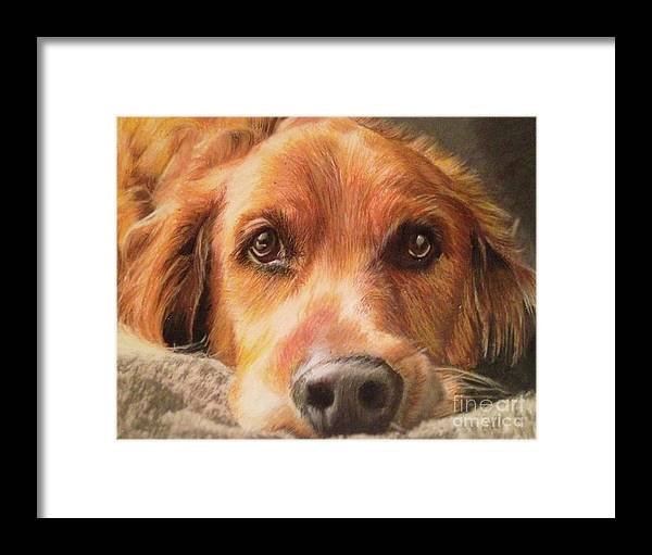 Golden Retriever Framed Print featuring the mixed media Bobby by Kelli Porter