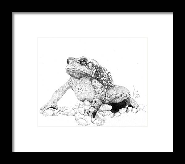 Toad Art Toads Reptile Artist Toad Stool Toader American Spadefoot Framed Print featuring the drawing Bufo Americanus by Preston Shupp