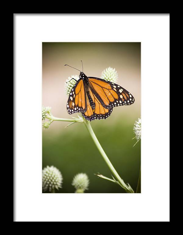 Chad Davis Framed Print featuring the photograph Butterfly In Wait by Chad Davis