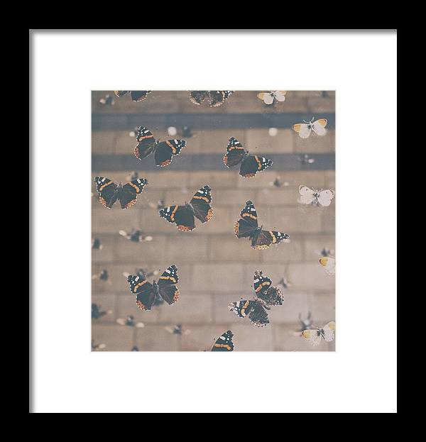 Butterfly Framed Print featuring the photograph Butterfly by Martin Newman