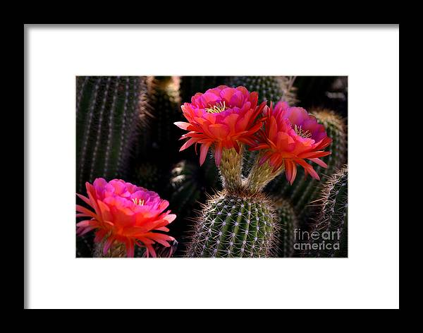 Red Framed Print featuring the photograph Sonoran Spring by Deb Halloran