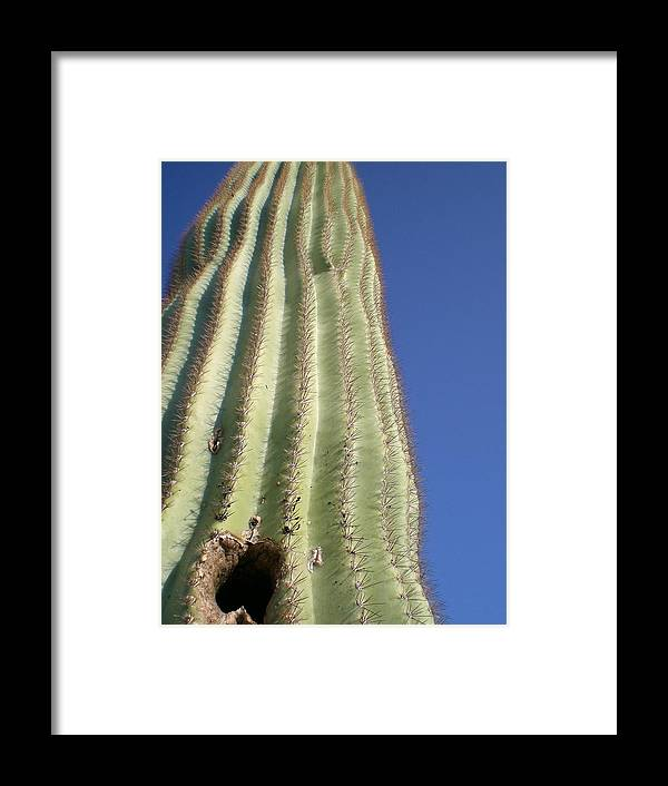 Blossom Framed Print featuring the photograph Cactus IIi by Aleksandra Buha