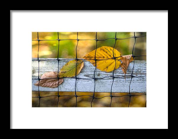 Framed Print featuring the photograph Caught by June Marie Sobrito