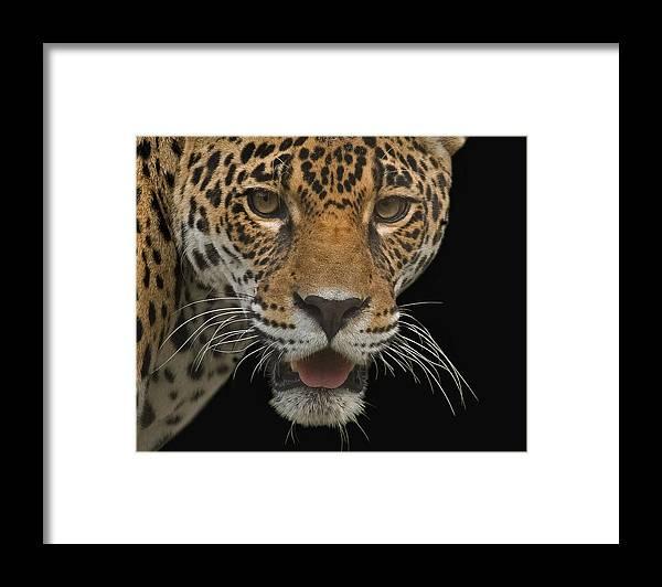 Jaguar Framed Print featuring the photograph Central American Jaguar by Larry Linton