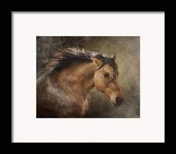 Equine Framed Print featuring the photograph Chase The Wind by Ron McGinnis