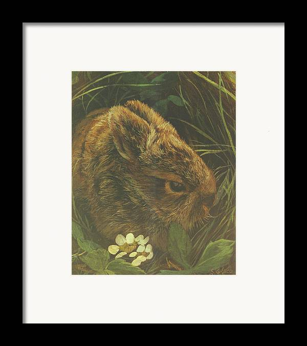 Wildlife Framed Print featuring the painting Cottontail Young by Steve Greco
