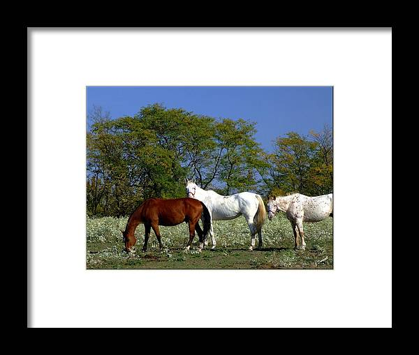 Horse Framed Print featuring the photograph Country Horses by Jim Darnall
