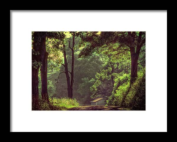 Trees Framed Print featuring the photograph Country Lane by Jim Painter