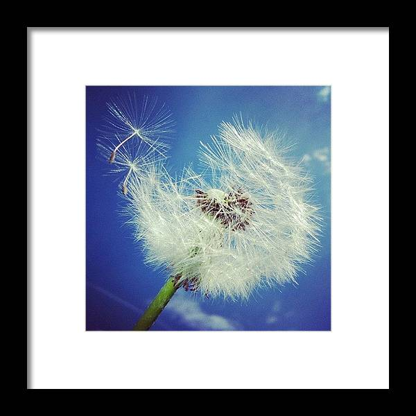 Dandelion Framed Print featuring the photograph Dandelion And Blue Sky by Matthias Hauser