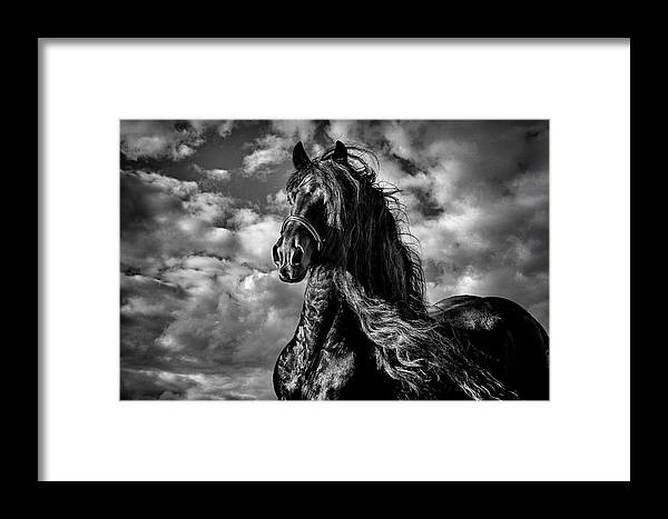 Dark Knight Framed Print featuring the photograph Dark Knight by Wes and Dotty Weber