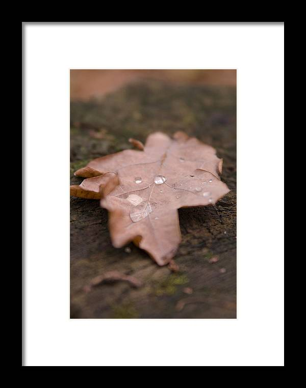 Leafs Framed Print featuring the photograph Dead Leaf by Mihail Antonio Andrei