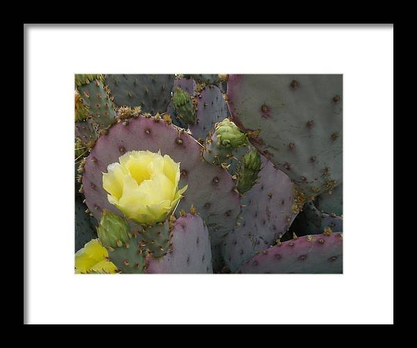 Desert Bloom Framed Print featuring the photograph Desert Bloom by Robert Cunningham