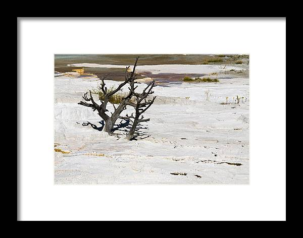 Yellowstone Framed Print featuring the photograph Desolate by Chad Davis