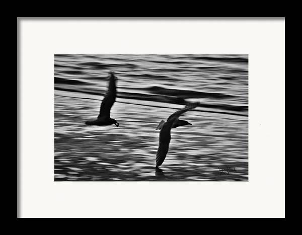 Seagull Framed Print featuring the photograph Dinner Debate by J D Banks