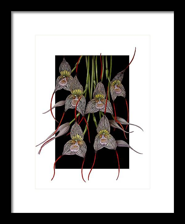 Orchid Framed Print featuring the painting Dracula Vampira by Darren James Sturrock