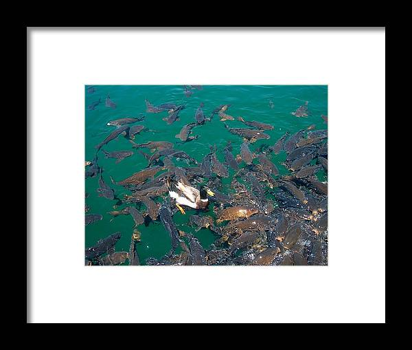 Framed Print featuring the photograph Duck Walk by Janet Hall