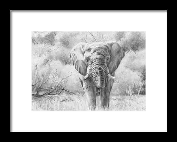 Elephant Framed Print by Nolan Clark