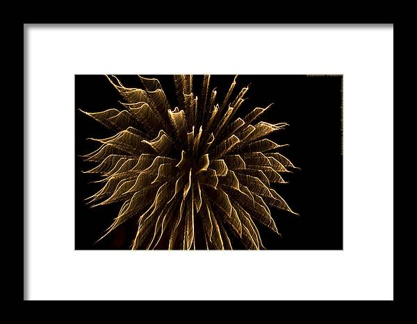 Fireworks Framed Print featuring the photograph Explosive Flowers 1 by Heinz - Juergen Oellers