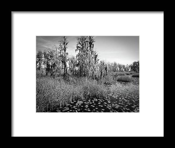 Swamp Framed Print featuring the photograph Faces Of The Swamp, No. 7 by Elie Wolf