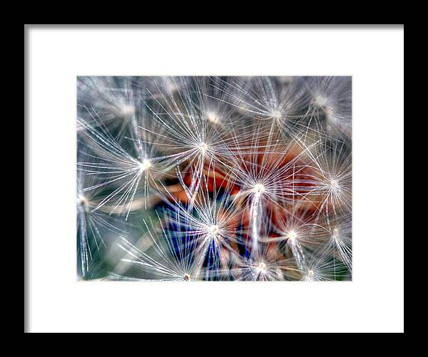 Dandelion Framed Print featuring the photograph Faith by Mitch Cat