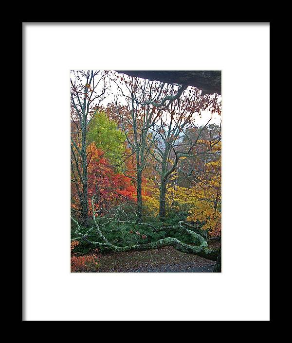 Trees Framed Print featuring the photograph Fall in the NC Mountains by Beebe Barksdale-Bruner