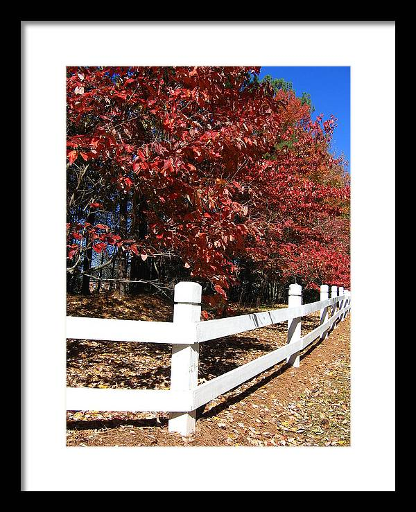 Tree Framed Print featuring the photograph Fall by Thomas Kelly