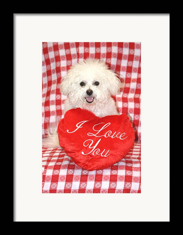 Animal Framed Print featuring the photograph Fifi Loves You by Michael Ledray
